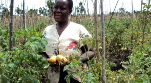Many small holder farmers cannot afford loans to boost and improve the quality of their yields.