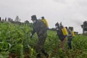 Rwanda deploys military to stop Army-worm invasion