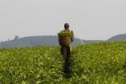 Agriculture tops Uganda Development Bank lending