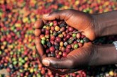 June coffee prices offer producers little confidence