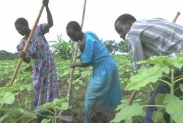 Agriculture stays underfunded as farmers told grow potatoes