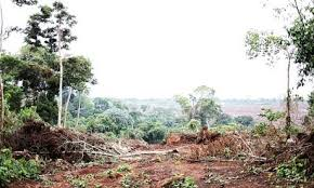 Clearing natural tropical forest for palm in Uganda's Ssse Islands