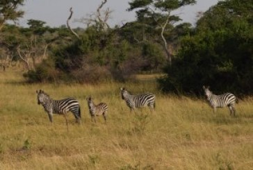 Uganda touts first Tourism Day