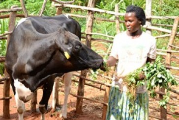 Regulator sees potential for improving Uganda milk exports