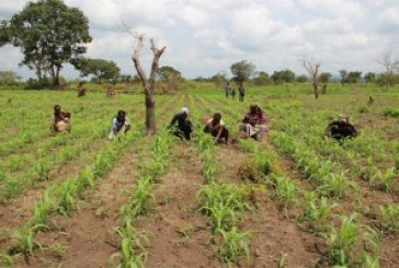 400,000 benefit from micro loans for farming