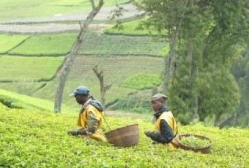 Rwanda in recovery after 2016 slowdown