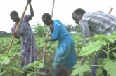 $150m to fund Uganda farming subsidies