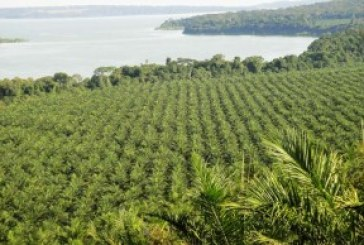 Government says palm oil production delivers positives