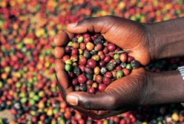 Proposed coffee law includes penalties for quality failures