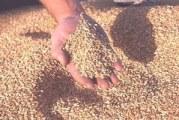 US government to help improve regional grain standards regime