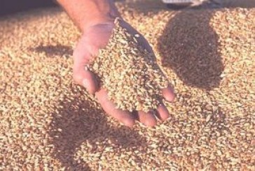 US government to help improve regional grain standards regime